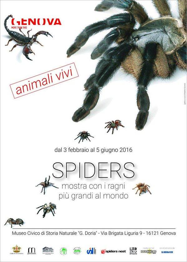 mostra spiders, museo di storia naturale