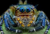 spider-museo-di-storia-naturale